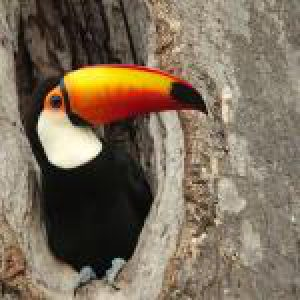 Amazon Wildlife PREMIUM