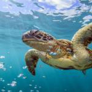 World Oceans Day PREMIUM